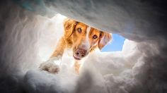 Ski Patrol Dogs of Snowmass on Vimeo