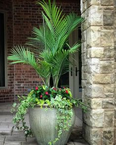 Poolside tropic... The weather has been tropical so might as well follow suit. Besides, it's hard to go wrong with a #majestypalm . . . .… Easy Christmas Crafts, Simple Christmas, Majesty Palm, Palm Plant, Unique Gardens, Summer Of Love, Container Gardening, Outdoor Living, How Are You Feeling