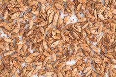 Pumpkin Pie-Flavored Pumpkin Seeds  - Delish.com