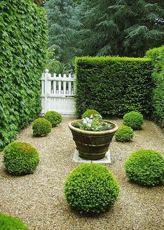 Buxus spheres planted into a graded pebble courtyard with subtle water feature and hedges. Traditional courtyard garden design with a contemporary twist. Pinned to Garden Design - Courtyards by Darin Bradbury. Boxwood Garden, Topiary Garden, Topiaries, Pea Gravel Garden, Boxwood Hedge, Cacti Garden, Back Gardens, Small Gardens, Formal Gardens