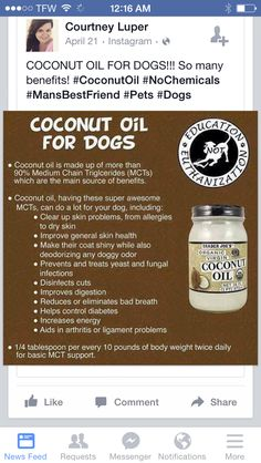 Rate this post Coconut Oil for Pups* *******Better to start with a lower doseage for a few weeks. Then you may up the dose***** Coconut Oil for Pups* *******Better to start with a lower doseage for a few weeks. Then you may up the dose***** Yorkies, Maltipoo, Pet Sitter, Pekinese, Coconut Oil For Dogs, Fu Dog, Oils For Dogs, Pet Treats, Homemade Dog