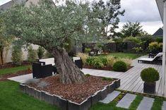 massif autour d\'un olivier | jardin | Pinterest