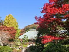 kamakura#鎌倉#浄妙寺#紅葉#禅寺#鎌倉五山第五位#鎌倉カフェ