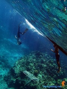 Ever since I saw the video of world champion freediver Guillaume Nery base jumping into Dean's Blue Hole I told myself that I want to do that too. Cebu, Underwater Photography, Extreme Sports, Diving, Whale, Aquarium, Shots, Learning, Fun