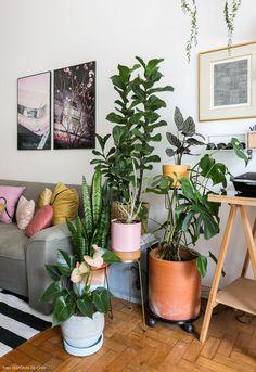 Cantinho da sala de estar tem vasos e suportes com plantas de espécies variadas.