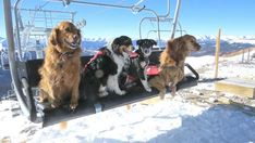 Colorado Avalanche dogs on the ski slopes