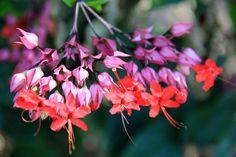 Flora brasileira - foto Natália Freitas