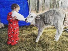 Little Girl Forms The Sweetest Bond With Baby Cow Who Lost Her Mom