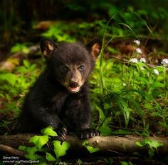 National Wildlife Federation's photo.