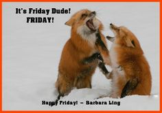 It's Friday Dude!                                        FRIDAY!  Share if you like it too!