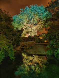 Animal Kingdom -- Tree of Life by night