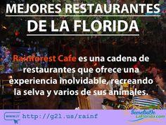 Rainforest Cafe es uno de los restaurantes más originales que encontrarás en cualquier parte del mundo. En la Florida este restaurante tiene varias locaciones en las cuáles mezclan excelente comida buen servicio y ambientado en una selva ==> http://g2l.us/rainf