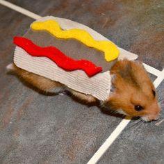 Hamster hotdog Pet Halloween costumes by la by laMarmotaCafe, $9.00