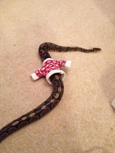 festive snake~~tko (ok, I admit it. That made me bust out laughing.)