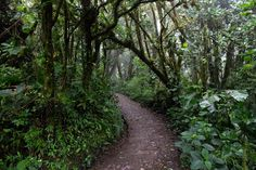 A guide to Monteverde Puntarenas, Monteverde, Sea Level, The Province, Most Visited, Costa Rica, Country Roads