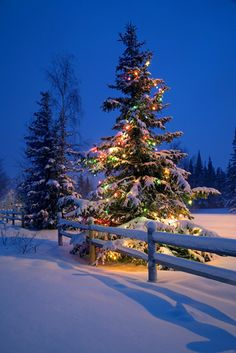 Decorated Christmas tree along snow covered fence rail @ night Anchorage…