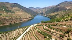 É tido como a bebida embaixadora de Portugal e tem séculos de história. No Dia Internacional do Vinho do Porto, explicamos quantos tipos de vinho há e porque duram tantos anos.