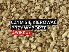 jak żwirek wybrać dla kota?, karpzoo.pl