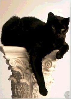 Beautiful black cat. Incensewoman https://www.facebook.com/CatsRPeopleToo