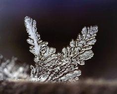 ali di ghiaccio (magie al microscopio) - ice wings