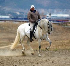 BONBON - The Best Spanish Horses - Horses for Sale Direct from Spain