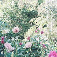 Pink bohemian wild flower garden #boho #flower #gypsy