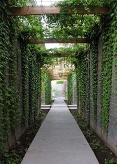 Contemporary steel & timber pergola draped in Boston Ivy