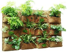 vertical planting wall