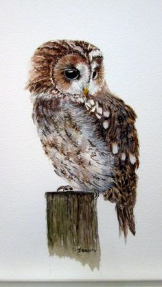 'Tawny Owl' by Josephine Bell