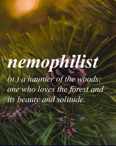 English (Greek origin) ne-'mo-fe-list -> nemophilist: ONE who loves the forest & it's BEAUTY & solitude The Words, Words To Use, Great Words, Crazy Words, Unusual Words, Unique Words, Beautiful Words, Beautiful Meaning, Word Nerd