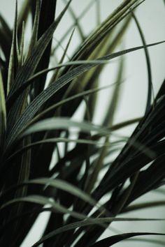 #palms #palmtrees