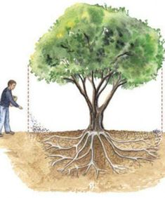 How to fertilize trees #Gardening