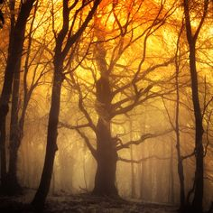 ominousplaces:  Alter of light, by Janek-Sedlar.