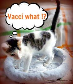 Vet 101 Q & A: Kittens & Vaccinations