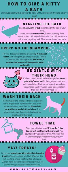 Advice and my experience giving your kitty a bath for the first time! Click to see the full post! www.greymacey.com  #kitten #bath #pet #grooming #cat #kitty #tips #advice #shampoo