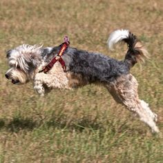 The 20 Best Active Dog Breeds | Outside Online