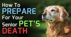Dr. Bittel, a holistic veterinarian and founder of SpiritsinTransition.org, talks about hospice care for animals. http://healthypets.mercola.com/sites/healthypets/archive/2015/01/18/animal-hospice-care.aspx