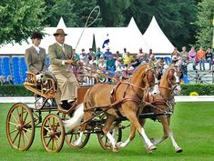 British Horse Driving Trials Association - Carriage Driving Office News