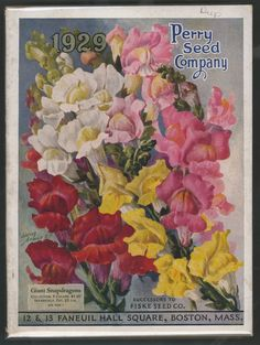 Front Cover, Perry Seed Company 1929 ~ Snapdragons