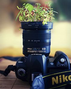Camera flower pots - do you have any old camera equipment laying around? Order Photo Prints, Print Instagram Photos, Camera Decor, Digital Camera Lens, Engineer Prints, Old Cameras, Unusual Plants, Photography Camera, Photography Equipment