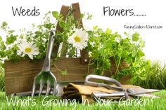 Weeds or Flowers? What's Growing in Your Garden.... - Raising Soldiers 4 Christ