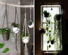 plantes grasses suspendues devant une fenêtre