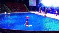 Dolphin Show | Dubai - YouTube