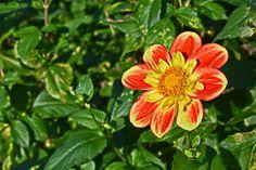 This fabulous Eden: Parc Floral de la Source