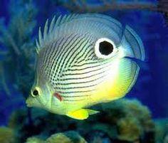 Resultado de imagem para animais marinhos