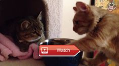 😸 Funny Cats Video Compilation 😼 Only Funny LikeSUBSCRIBEShare 😽 from Pet Lovers 😻