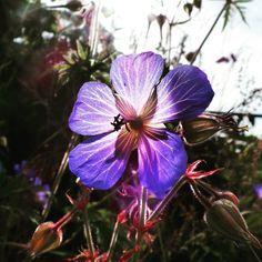 Bright purple flower.. #purpleflowers #flowers #purple #colour #nature #southeast #england #sussex #agriculture #bikeride #contrast #southdowns #nationaltrust #beautyspot
