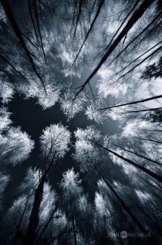 Black Woods by Nitrok.deviantart.com on @deviantART