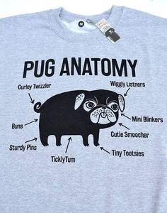 anatomy of a pug