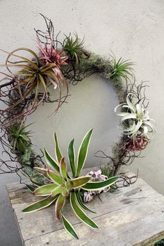 Air plants for wreath